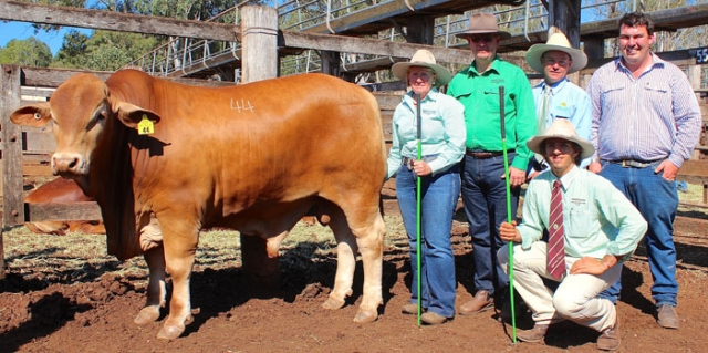 BUNYA BULL SALE We offered six bulls for sale at the 2017 Bunya Bull Sale and achieved a 100% clearance with a top of $12,500 and an average of $7,333.