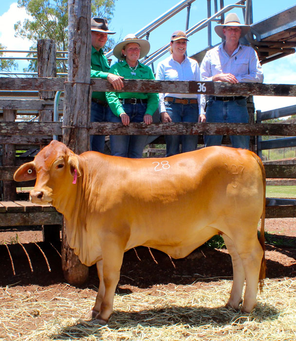 Equal top priced unjoined heifer, Nindethana Inga who sold to Rangeview Droughtmasters 1168 for $5,250.