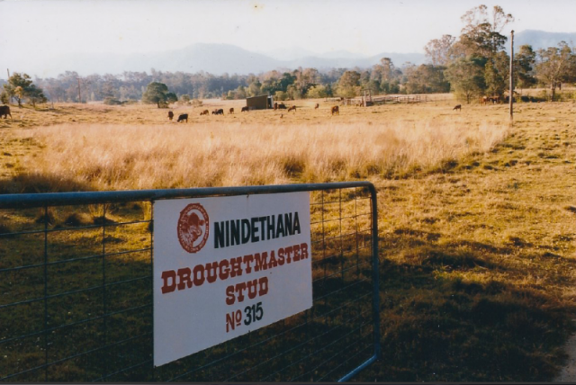 The entry to 'Nindethana' after Betts Road was constructed in the early 1980s.