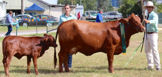 Fontine and Lyla - Reserver Senior Champion Tropical Breed Cow